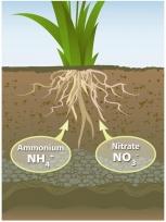 m_596_nitrogen_plant.jpg